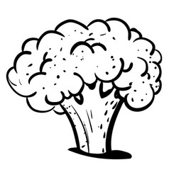 Cauliflower drawing on white background vector
