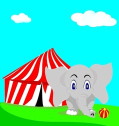elephant circus vector image
