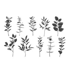 greenery hatching drawing set sketch of vector image