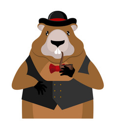 groundhog day marmot in hat and with pipe rodent vector image