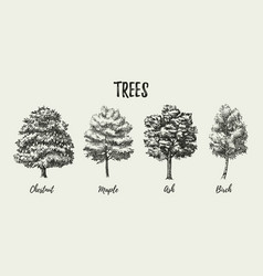 Hand drawn sketch tree species set isolated vector
