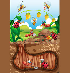 Scene with plants and insects in garden vector