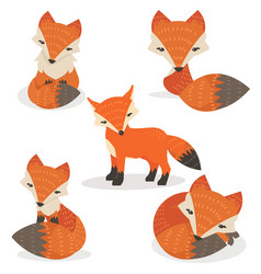 cute foxes cartoon set in different poses vector image