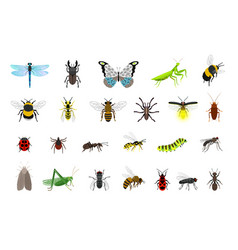 cute insects collection vector image