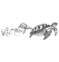 Hand drawn sea turtle life cycle vector