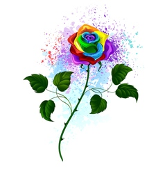 Rainbow Rose vector image