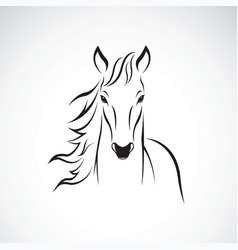 a horse on white background wild animals vector image vector image