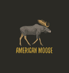 american moose or eurasian elk engraved hand drawn vector image vector image