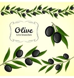 Collection olive branch black olives vector