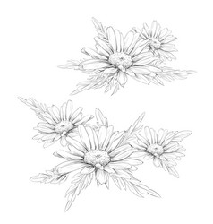 Daisy flower drawing hand drawn engraved vector