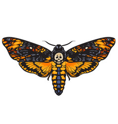 death head hawkmoth vector image