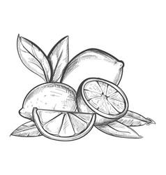 lemons hand drawn in black vector image