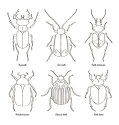 set of beetle vector image
