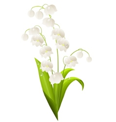 lily of the valley isolated vector image vector image