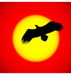 Silhouette of an eagle flying in front of the sett vector image