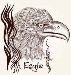 hand drawn eagle close up plane vector image