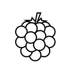 Raspberry blackberry line icon graphic elements vector