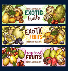 Fruits exotic tropical fruit sketch banners vector