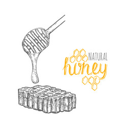 Hand drawn honey stick and honey comb over white vector