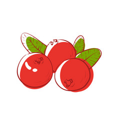 Ripe cranberry isolated icon vector
