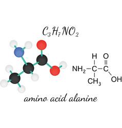 C3H7NO2 alanine amino acid molecule vector image vector image