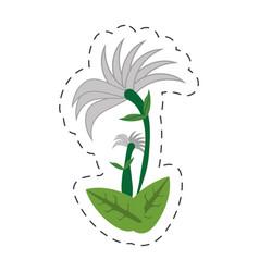 cartoon chrysanthemum flower image vector image