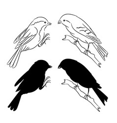The outline and of the silhouette of the birds set vector