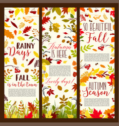 Autumn or fall seasonal banners set vector