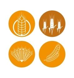 Barley icon design vector image