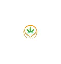 cannabis leaf organic logo vector image