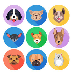 Concept of purebred dogs on colored circle icons vector