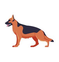 German shepherd purebred dog pet animal side vector