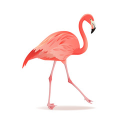 red and pink flamingo cool vector image