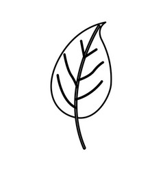 sketch contour of simple leaf plant vector image