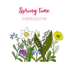 spring flowers crocus scilla adoni vector image
