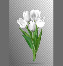 white tulips on a black background vector image