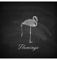 a chalk flamingo on the blackboard texture vector image vector image