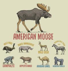 wild gorilla moose or eurasian elk camel and vector image