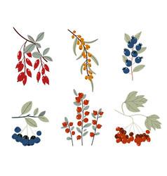 Collection design floral elements autumn vector