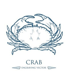 Crab Drawing vector image