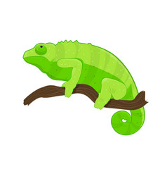 Green chameleon on branch vector