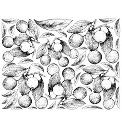 Hand drawn background of buffalo thorn fruits vector