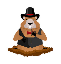Marmot in hat and with pipe rodent aristocrat for vector