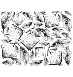 Hand drawn background of fresh cambuci fruits vector