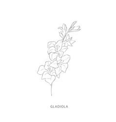 Hand drawn gladiola flowerplant design elements vector