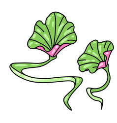 lotus leaves water lily vector image