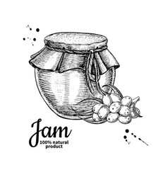 sea buckthorn jam glass jar drawing frui vector image