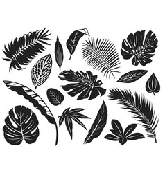 tropical leaves silhouette palm tree leaf vector image