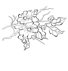 blossoming branch of an apple-tree vector image vector image