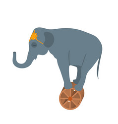 circus elephant on the wheel icon style flat vector image vector image
